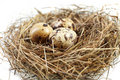 Egg in real nest Royalty Free Stock Photo