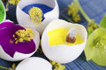 Egg Shells With Paints And Spr...