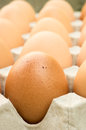Egg simple brown tone in tray Royalty Free Stock Images