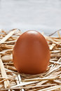 Egg on the straw Royalty Free Stock Image