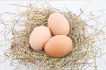 Egg three laid on the hay Stock Image