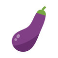 Eggplant or aubergine vegetable isolated vector illustration.