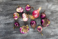 Eggplants and onion grown in organic farming
