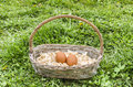 Eggs in basket ecological chicken Royalty Free Stock Image