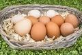 Eggs in basket fresh chicken Royalty Free Stock Photos