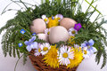 Eggs in a basket with spring plants and flowers Stock Image