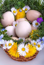 Eggs in a basket with spring plants and flowers Royalty Free Stock Photos