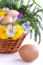 Eggs in a basket with spring plants and flowers Stock Photography