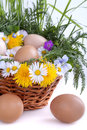 Eggs in a basket with spring plants and flowers Royalty Free Stock Photo