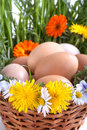 Eggs in a basket with spring plants and flowers Royalty Free Stock Photography