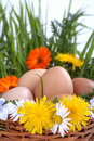 Eggs in a basket with spring plants and flowers Stock Photos