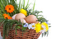 Eggs in a basket with spring plants and flowers Royalty Free Stock Images