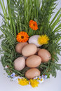 Eggs in a basket with spring plants and flowers Stock Images