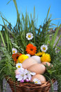 Eggs in a basket with spring plants and flowers Royalty Free Stock Image