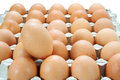 Eggs in the Carton Royalty Free Stock Images