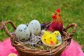 Eggs chicken and rooster in a basket easter background Royalty Free Stock Images