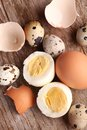 Eggs close up of hard boiled egg egg shells and quail Stock Image