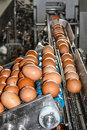 Eggs coming from the transmission line and directed the production line automatic breaking and training mix Stock Photos