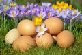 Eggs and crocus in springtime Stock Photos