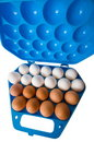 Eggs and the dark blue container. Royalty Free Stock Photography