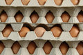 Eggs displayed (3) Royalty Free Stock Photo