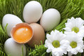 Eggs ecological and yellow yolk Royalty Free Stock Images