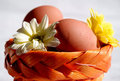 Eggs and flowers in basket 2 Royalty Free Stock Photography
