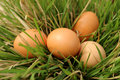 Eggs in grass green easter holiday Royalty Free Stock Photos