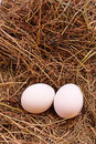 Eggs in hay Stock Image