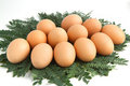 Eggs on the leaves. Stock Photos