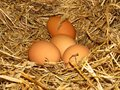 stock image of  Eggs in natural straw hens nest. Organic brown-shelled eggs. Happy Easter. Bio farming.