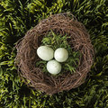 Eggs in nest. Royalty Free Stock Photo