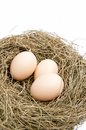 Eggs and nest Royalty Free Stock Photo