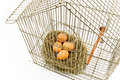 Eggs in Nest confined in Bird Cage Stock Photos