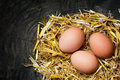Eggs in a nest of straw on dark wooden background copy space three golden with Stock Photo