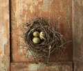 Eggs in Nest Royalty Free Stock Photo