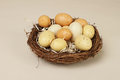 Eggs in a nest yellow egg concept food on wood background Royalty Free Stock Photography