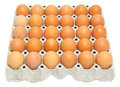 Eggs in the package many isolated Stock Image