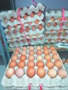 The eggs are tidy. Royalty Free Stock Photo