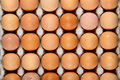 Eggs in tray Royalty Free Stock Image