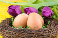 Eggs and tulips Royalty Free Stock Photography