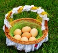 Eggs in a wattle basket Stock Photo