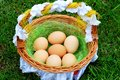 Eggs in a wattle basket Stock Images