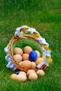 Eggs in a wattle basket Stock Image