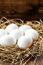 Eggs white in a nest Stock Photography