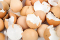 Eggshell Royalty Free Stock Photo