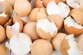 Eggshell Royalty Free Stock Photo