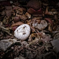 An eggshell on a compost heap with other kitchen waste artistically alienated to create grungy somber atmosphere Royalty Free Stock Photography