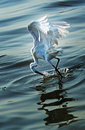 Egret is hunting Royalty Free Stock Photo