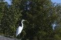 Egret na dachu Obraz Royalty Free